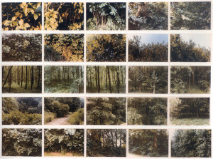 atlas-trees